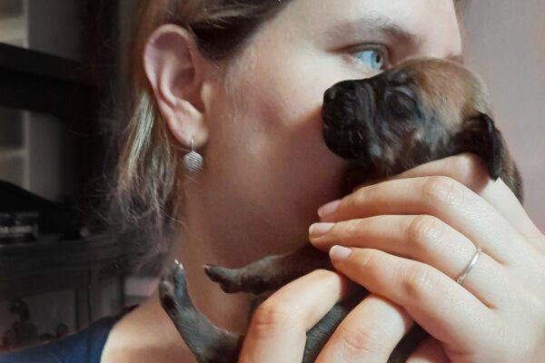 Rhodesian Ridgeback puppy Ayaba Kennel